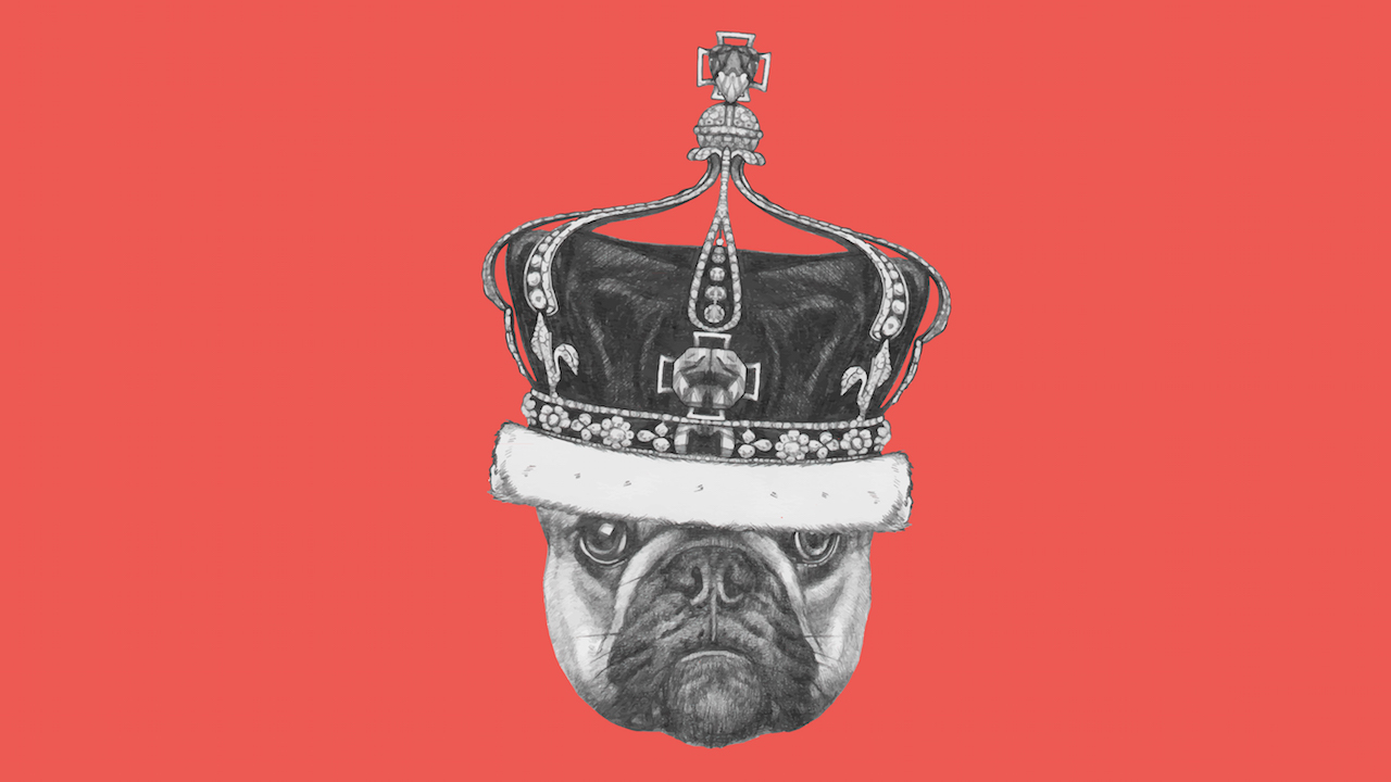 British bulldog with crown